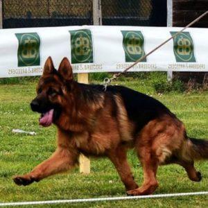 Dingo Di Casa Mary 48
